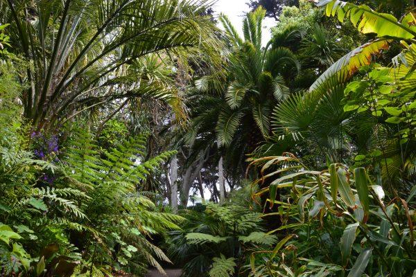 Palm 2021